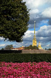 Peter and Paul Fortress in St. Petersburg. The picture was taken in the summer in the city center of St. Petersburg, in the foreground flowers Stock Image