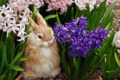 Peter Rabbit Royalty-vrije Stock Foto's