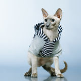 Peterbald Cat in Hoody Royalty Free Stock Photos