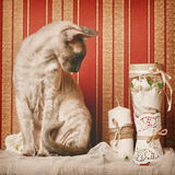 Peterbald Cat Royalty Free Stock Image