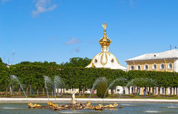 peterhof俄国 橡木喷泉和特别库房在顶面庭院里 免版税库存照片