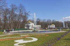 Peterhof宫殿更低的公园盛大小瀑布喷泉 在联合国科教文组织` s世界遗产名录名单包括的Peterhof宫殿 免版税库存图片