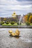 Peterhof,俄罗斯, 2016年10月5日:在形状的喷泉  免版税库存图片