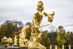 Peterhof,俄罗斯, 2016年10月5日:金黄雕塑在公园 库存图片