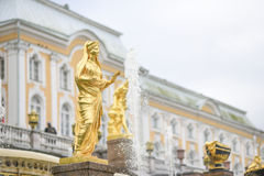 Peterhof,俄罗斯, 2016年10月5日:金黄雕塑在公园 图库摄影