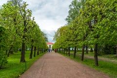 Peterhof,俄罗斯- 6月03 2017年 亭子偏僻寺院和叶子胡同在更低的公园 图库摄影