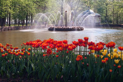 PETERHOF, RUSSIA-MAY 21 :喷泉在Petrodvorets公园  图库摄影