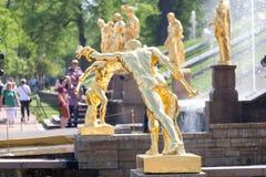 PETERHOF, РОССИЯ 14-ОЕ МАЯ: Фонтаны больного каскада в парке o Стоковая Фотография RF