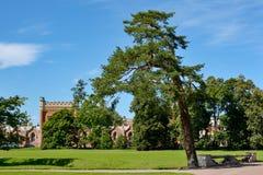 Peterhof, beautiful tree in the Park Stock Photography