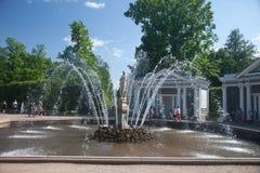 Peterhof Eve Fountain Images libres de droits