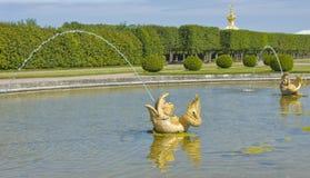 Peterhof, fontanny Obrazy Stock