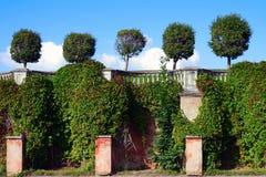Peterhof, la parete difensiva del giardino del Venere Immagini Stock