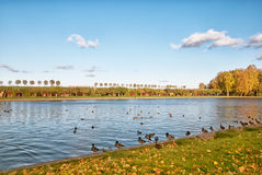 Peterhof La Russia Marly Pond nel parco più basso Fotografie Stock