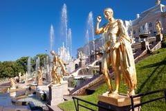 Peterhof Museum-reserv, berömd kaskad av guld- skulpturer för springbrunnfnd nära den Peterhof slotten Arkivfoto