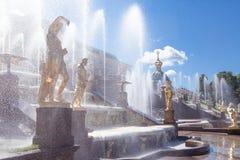 Peterhof-Museum-Reserve, berühmte Kaskade von Brunnen fnd goldenen Skulpturen nahe dem Peterhof-Palast Stockbilder