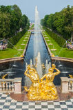 Peterhof pałac St Petersburg, Rosja Obniża Parkowe Uroczyste Kaskadowe fontanny Peterhof pałac zawierać w Unesco Obraz Royalty Free