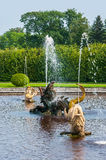 Peterhof Palace St Petersburg, Russia. Golden fish statue fountain in Higher Park. The Peterhof Palace included in the Royalty Free Stock Images