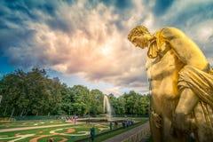 Peterhof-Palast, goldene Statue mit Wasserströmen und Brunnen stockfotografie