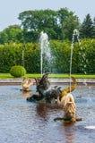 Peterhof-Palast St Petersburg, Russland Goldener Fischstatuenbrunnen im höheren Park Der Peterhof-Palast eingeschlossen in Lizenzfreie Stockbilder