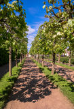 Peterhof parks and trees under blue sky Royalty Free Stock Photos