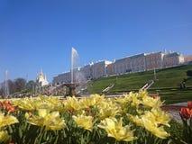 PETERHOF, R?SSIA, cascata grande em Pertergof, St Petersburg os conjuntos os maiores da fonte Lente larga do ?ngulo e exposi??o l fotos de stock