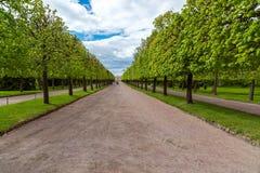 Peterhof Rosja, Czerwiec, - 03 2017 Pawilonu erem i ulistnienie aleja w Niskim parku Obraz Stock
