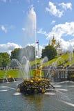 PETERHOF ROSJA, LIPIEC, - 24, 2015: Samson Który Drzeje Oddzielnie lwa usta fontannę obniża parka Zdjęcie Royalty Free