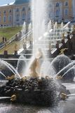 Peterhof, Rosja - 06 2012 Maj: fontanna Samson i uroczysty cascad Zdjęcia Royalty Free