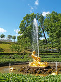 PETERHOF, RUSSIA.The Triton Who Is Tearing Apart a Mouth to a Sea Monster fountain in Nizhny park Royalty Free Stock Photos