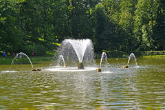 peterhof russia Valspringbrunnen i sanddammet Royaltyfri Fotografi