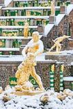 Peterhof Russie Samson Fountain Photographie stock libre de droits