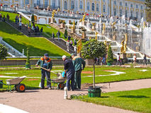 Peterhof, Russland Reparieren Sie Arbeit im Peterhof-Park Lizenzfreies Stockbild