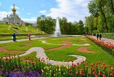 Peterhof Ryssland - Juni 03 2017 Stor italiensk springbrunn i stor förlust Arkivbild