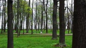 PETERHOF RYSSLAND - MAJ 10, 2015: Vårdagen på Peterhof parkerar, en väg och vita blommor Arkivbilder