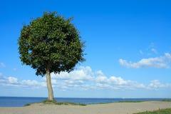 Peterhof, the tree on the shore of the sea Stock Photo