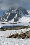 petermann острова Антарктики Стоковое Фото