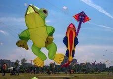 Petersburg Rosja, Czerwiec, - 26, 2016: Kania festiwal w miasteczku Pushkin Zdjęcia Stock