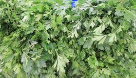 Peterselie groene verse oogst van de zomer Royalty-vrije Stock Fotografie