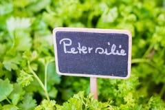 Peterselie het Duits: De close-up van het Petersilieteken op voedselmarkt Stock Afbeeldingen