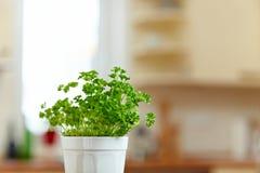 Peterselie in keuken Stock Foto
