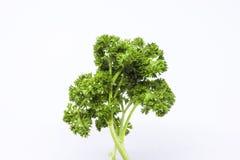 Peterseliebladeren om voedselingrediënten te zijn Stock Fotografie