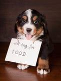 Petición del perrito de la montaña fotos de archivo