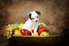 Petición del perrito en cuenco de fruta Imagen de archivo libre de regalías