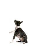 Petición del perro Imagen de archivo libre de regalías