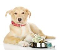 Petición del perro imagenes de archivo