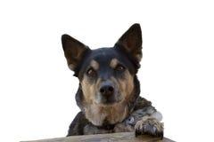 Petición del perro foto de archivo libre de regalías