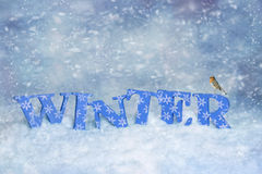 Petirrojo del invierno Imagen de archivo