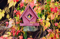 Petirrojo rojo en casa del pájaro imagen de archivo