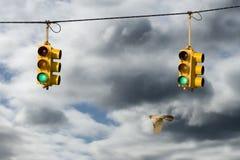 Petirrojo y semáforos Imágenes de archivo libres de regalías