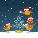 Petirrojos divertidos de la Navidad Imágenes de archivo libres de regalías